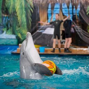 Дельфинарии, океанариумы Правдинского