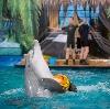Дельфинарии, океанариумы в Правдинском